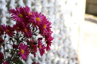 自然,風景,花,屋外,景色,ぼかし,外,flower,Autumn,夢,ポジティブ,草木,願い,希望,可能性,Scenery,outdoors
