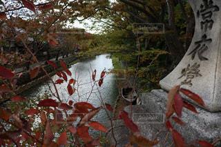 秋,紅葉,屋外,観光地,景色,外,滋賀,関西,八幡堀,近畿