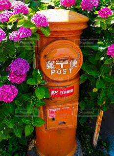 紫陽花,6月,赤色,街中,ピンク色,紫色,昔ながら,郵便ポスト,梅雨入り前