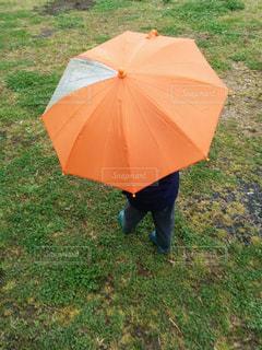 雨,傘,幼児,梅雨,オレンジ色