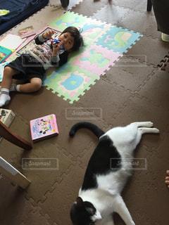 お部屋,ぐうたら息子とぐうたら猫
