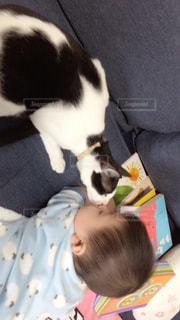 猫,お部屋,リラックス,くつろぐ,のんびり,ハチワレ,はじめてのチュウ