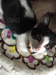 白い面の上に座って猫の写真・画像素材[1258139]
