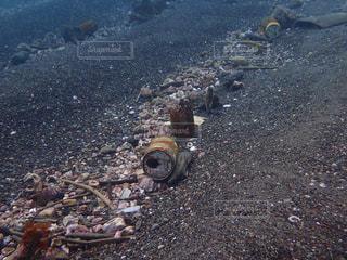小田原漁港海底清掃の写真・画像素材[1265678]