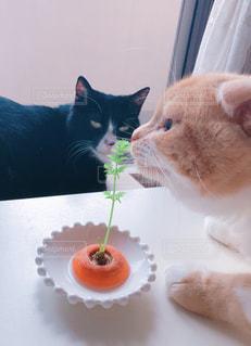 猫,動物,お部屋,緑,植物,部屋,室内,人参,のんびり,まったり