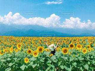 空,花,夏,ひまわり,雲,女の子,旅行,夏休み,壁紙,熱中症
