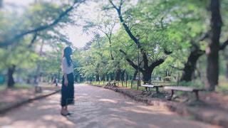 公園,屋外,晴れ,散歩,木漏れ日,日差し,樹木,ピクニック,被写体,いい天気,他撮り
