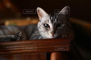 木製テーブルの上に座っている猫の写真・画像素材[1257907]