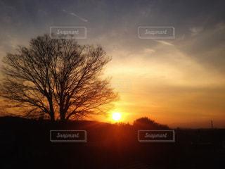風景,空,夕日,木,夕焼け,お気に入り,埼玉県,フォトジェニック