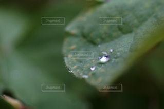 自然,雨,雫,まんまる,草木