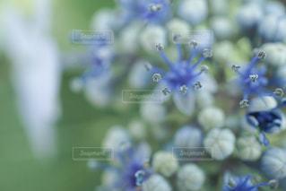 自然,花,雨,あじさい,紫陽花,梅雨,草木