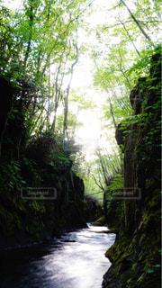 フォレスト内のツリーの写真・画像素材[1205358]
