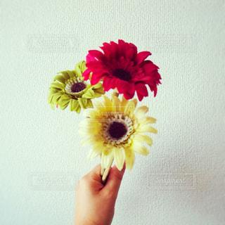 花の写真・画像素材[1199539]
