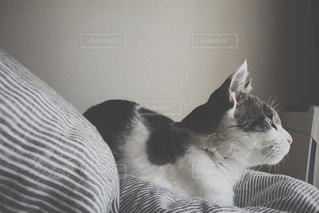 猫,お部屋,屋内,部屋,室内,アート,iphone,梅雨,cat,雨の日,ネコ,vsco
