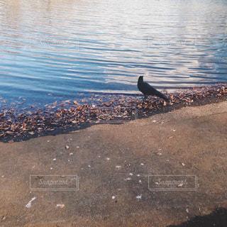 水の体の端に立っている鳥の写真・画像素材[1223897]