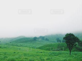ノルウェイの森の写真・画像素材[1232724]