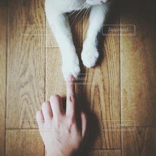 襟付きのシャツを着て猫の写真・画像素材[1254917]