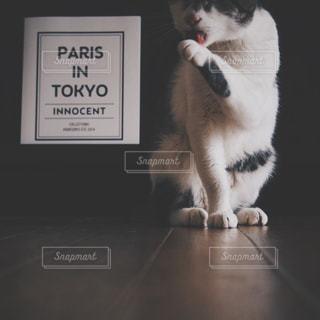 黒のテキストで白サインの上に座っている猫の写真・画像素材[1255117]
