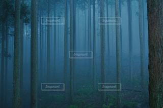 木のストライプの写真・画像素材[1261255]