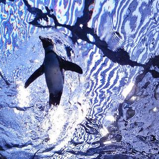 水の動物の写真・画像素材[1313573]