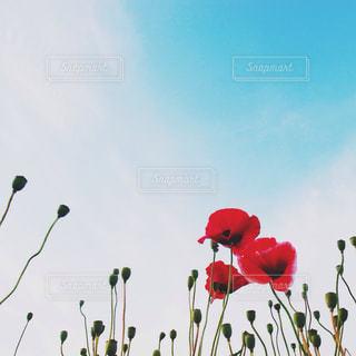 色とりどりの花のグループの写真・画像素材[1368267]