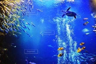 水の上を飛ぶ鳥の群れの写真・画像素材[1390323]