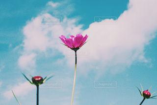 曇りの日に凧の飛行人の写真・画像素材[1399348]