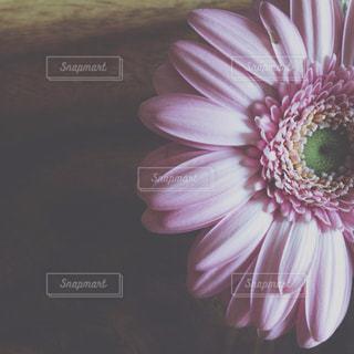 花,ピンク,テーブル,ガーベラ,マクロ,Gerbera,vsco