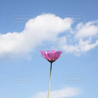 晴れた日に凧の飛行人の写真・画像素材[1454531]