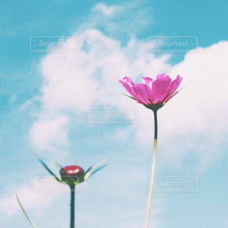 近くに曇りの日に紫の花のアップの写真・画像素材[1454535]