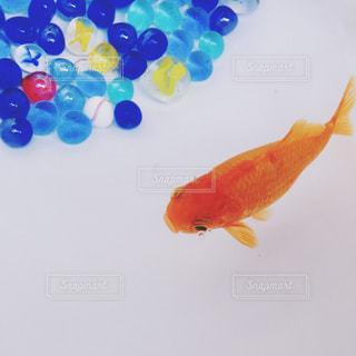 水面下を泳ぐ魚たちの写真・画像素材[1537407]