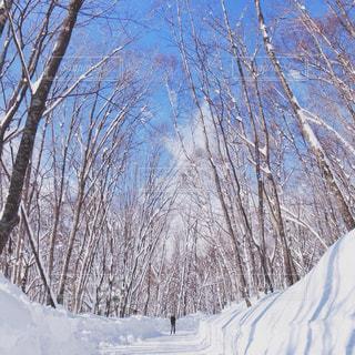 自然,風景,冬,雪,屋外,白,樹木,人物,人,SNOW,ホワイト