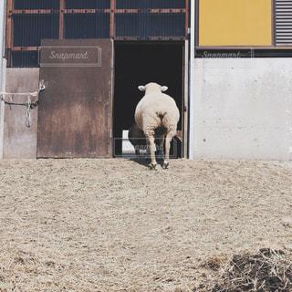 風景,屋外,後ろ姿,羊,景色,ひつじ,草,小屋,日中