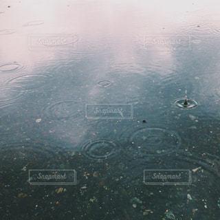 自然,雨,屋外,青,水滴,水面,梅雨,日中