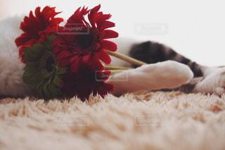 花束を君にの写真・画像素材[2291540]