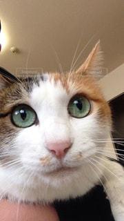 近くにカメラを見て猫のアップの写真・画像素材[1195798]