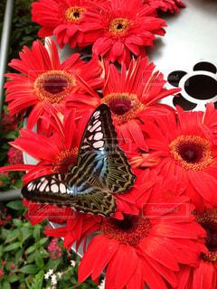 蝶々の写真・画像素材[1201354]