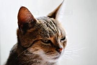 近くに猫のアップの写真・画像素材[1211021]