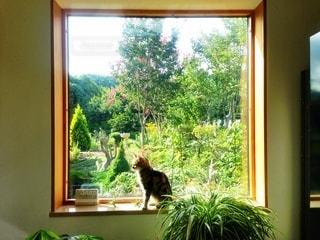 窓の前に座っている猫の写真・画像素材[1212768]