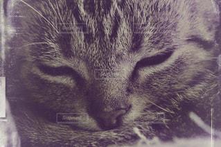近くに猫のアップの写真・画像素材[1233265]