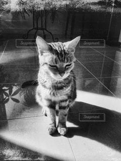 カメラを見ている猫の写真・画像素材[1248854]