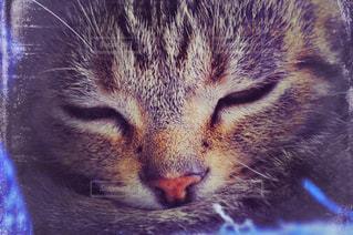 近くに猫のアップの写真・画像素材[1255174]