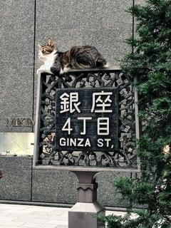 建物の側に座っている猫の写真・画像素材[1255349]