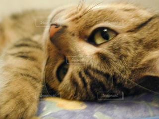 近くに猫のアップの写真・画像素材[1255422]