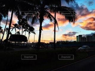 風景,空,夕日,屋外,夕暮れ,景色,鮮やか,樹木,旅行,ヤシの木,ハワイ,ワイキキ,整列,青色,草木,眺め,パーム,フォトジェニック,インスタ映え,多色