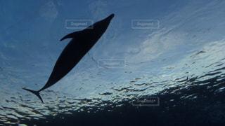 水の体の上を飛んでいる鳥の写真・画像素材[1196480]