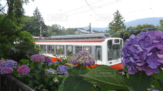 電車,紫,曇り,紫陽花,旅行,箱根,梅雨,アジサイ