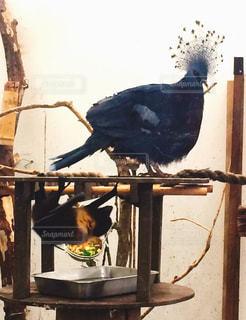 鳥とコウモリの写真・画像素材[1216992]