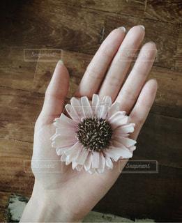 花を持つ手の写真・画像素材[1233892]