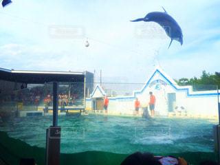 イルカの大ジャンプ!の写真・画像素材[1312897]